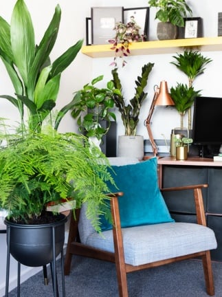 Add Personality to Your Workspace with Plants and Other Items