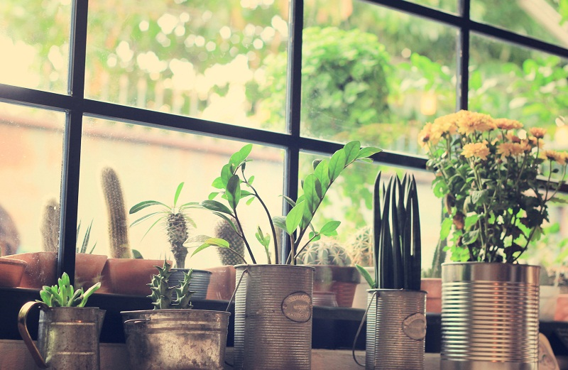 Use house plants in your RV to relieve stress and clean the air